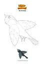 Coloriage Vol d'oiseau